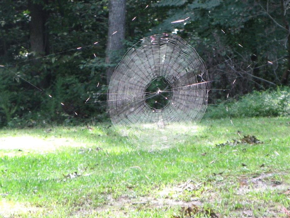 The biggest spider web ever.