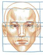 Ansiktsproportioner framifrån.