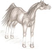 Teckna hästar-Arabiskt Fullblod