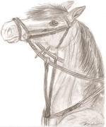 Teckna hästar-Welsh mountainponny