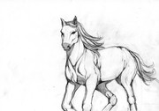 horse's sketch1