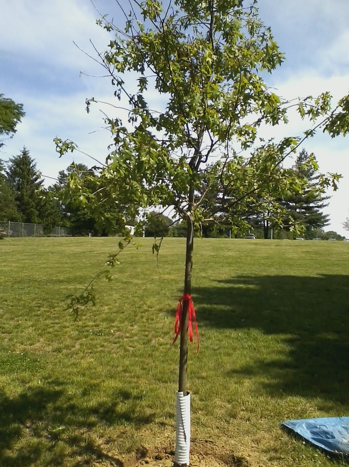Tim's Tree 05-17-2012