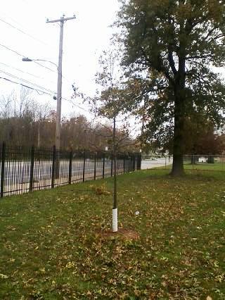 Timmy's Tree 11-02-2012