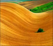 Pannonian Plain - Central Europe