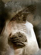 The bird Madonna