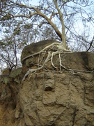 Malawian Determination