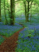 Spring forest with forget-me-nots