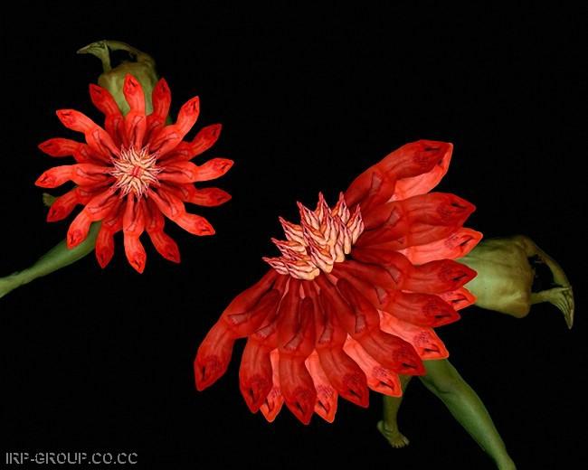HUMAN FLOWERS144