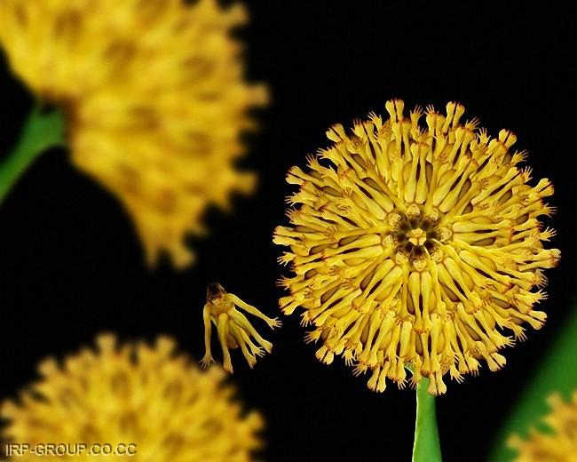 HUMAN FLOWERS111