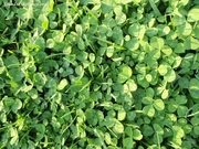 Clover French Park March 2012 SDH url