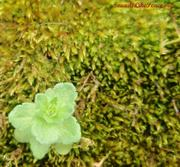 Moss and little plant March 2012
