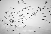 birds over marpisa