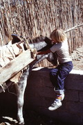 Boy Conferring with Donkey