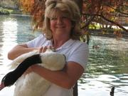 """Queenie""--The Black-Necked Swan"