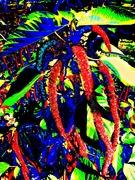Chenille Plant-Color Study