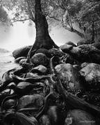 Rock & Root