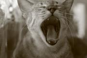 Yawn..