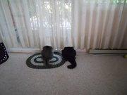 poor kittehs