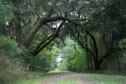 secret driveway