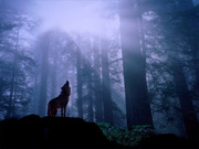 """Wolf Spirit, with whom I """"feel"""" a connection"""
