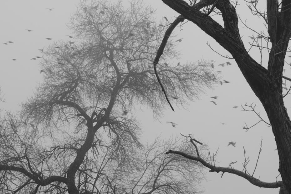 πουλιά στην ομίχλη