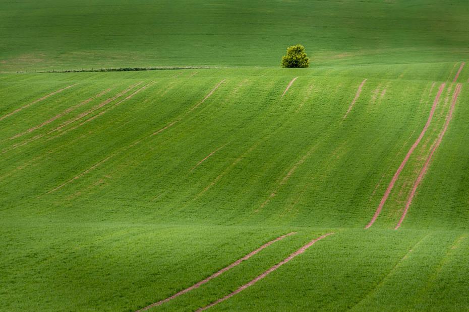 Green Fields