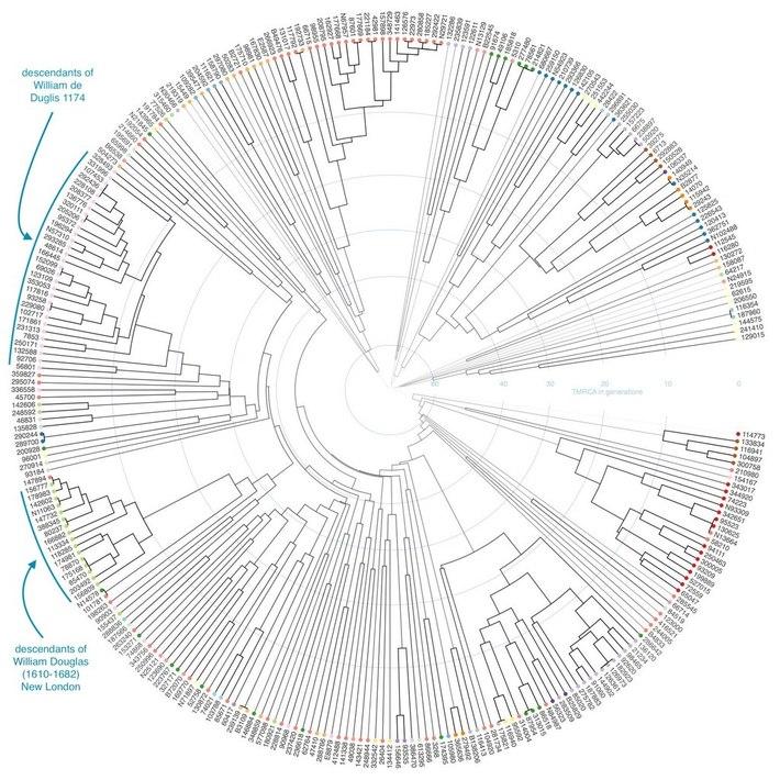 douglas YDNA tree