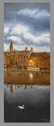 Bruges cygne