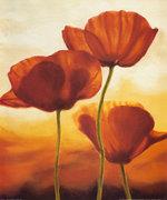 Andrea Kahn - Poppies in Sunlight I