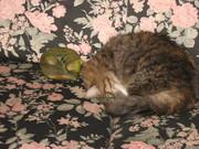 vies de chat