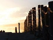 toile de lumière de la dune araignee