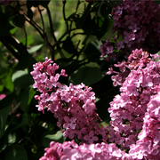 fleur carré