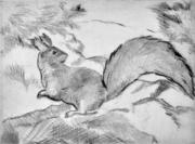 Watchful Squirrel - drypoint etching