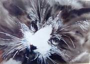Le chat -