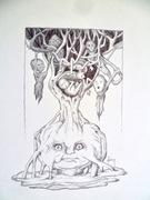 Acrobates arboricoles