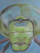 Tête de libellule pastel sec