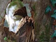 dansles bois