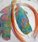Marbled Cockatoo with Natural Cockatoo Headfeathers