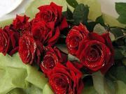 trandafiri-pentru-