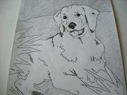 en golden retriver hund