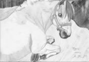 Figaro porträtt nr 2