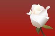 Digital Little Rose