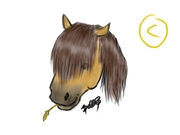 häst med vete