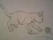 Katt o ett garn-nystan