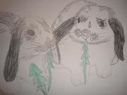 Mina kaniner