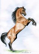 Hästness