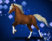 Glad häst