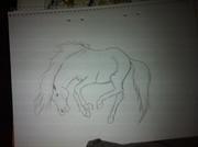 Bockande häst