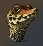 krokodil bebis