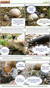 snail_love